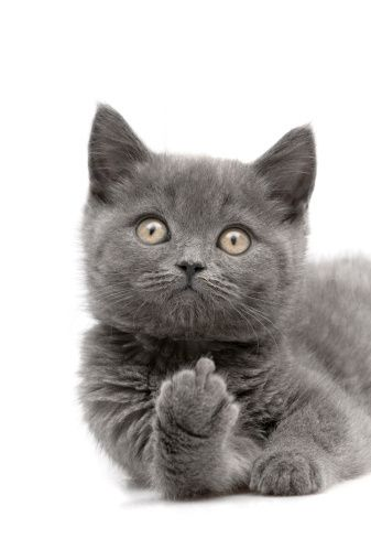 ~Bad kitty...~