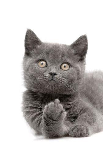 Tude kitten.. .     (Mena    =)