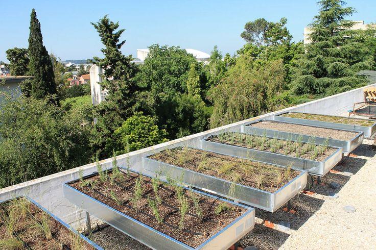 Rooftop Garden Green Roofs Patio