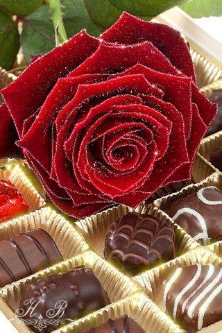 Imagen romántica de rosas rojas de amor con movimiento y brillo rosas y chocolates