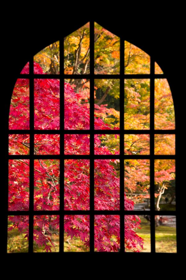 Window #japan #kyoto