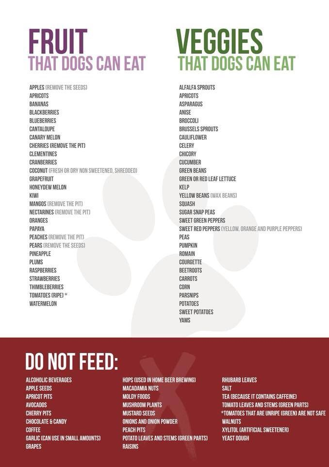 Food That Dogs Can & Can't Eat