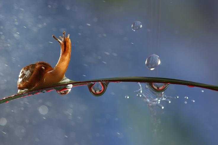 """Raindrops"" by Vadim Trunov, via 500px.: Snails, Photos, Dreams, Vadim Trunova, Vadimtrunov, Raindrop, Macros Photography, Animal, Rain Drop"