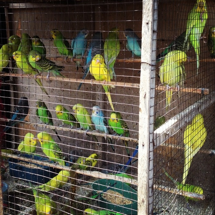 Colorful birds at the Bird Market. Photo by Electra Gilies.