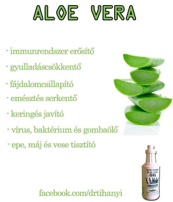 Aloe Vera | Socialhealth
