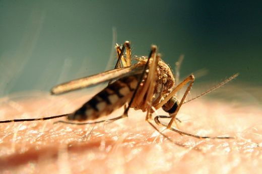 Mosquito Bites Treatment of the Itch...using Orajel...Brilliant!
