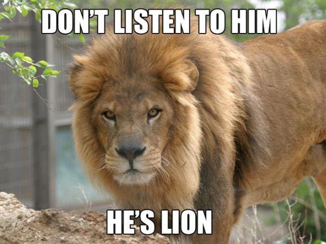 Amusing Animal Puns Selection (10 pics) - Izismile.com