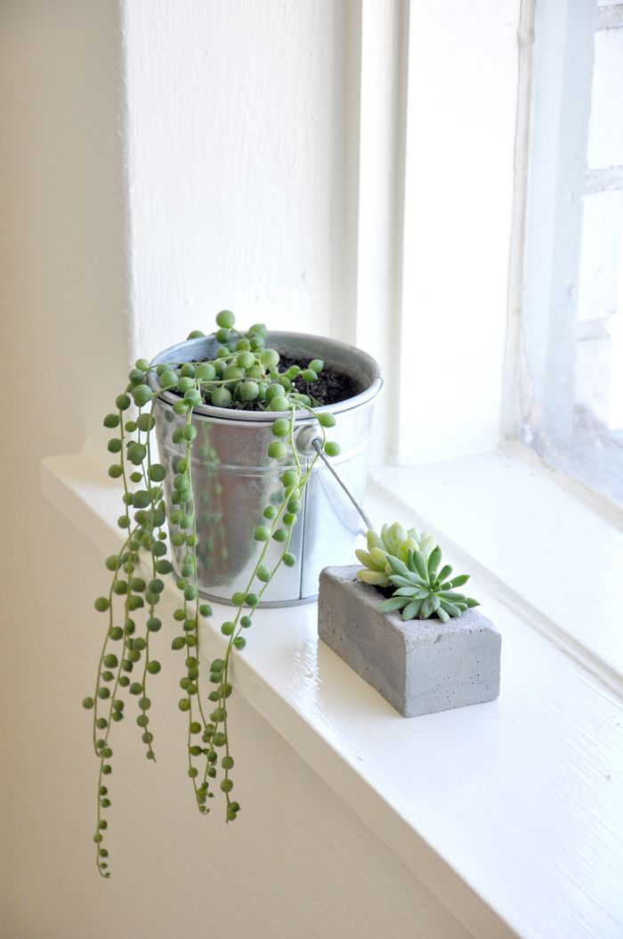 string of pearls plant with concrete breeze block planter, with baby succulent plants