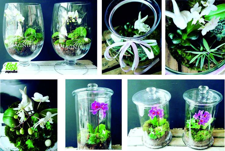 #miniogrodki #terrarium #miniaturegarden #kwiaciarniaszczecin #kochamkwiaty #zielonamoda #orhidea #storczyki #phanelopsis #mossarium #plants #flowershop #kwiciarnia  #kwiatydoniczkowe #flowergfits #kwiaty #greendesign