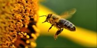 SIGN NOW_SAVE THE BEES - Avaaz.org - The World in Action