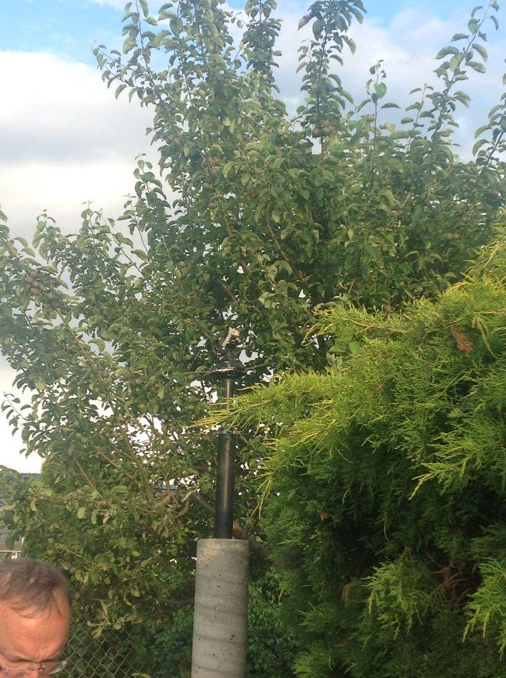Karen Lee Edwards Studio®; Karen Lee Edwards; Apple tree 01©; 2015