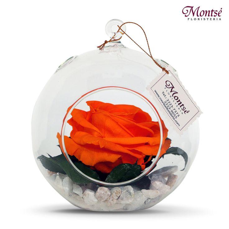 Rosas Preservadas : Rosa Preservada Naranja en Esfera de Vidrio