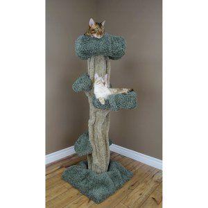 Cat Trees on Hayneedle - Cat Trees For Sale
