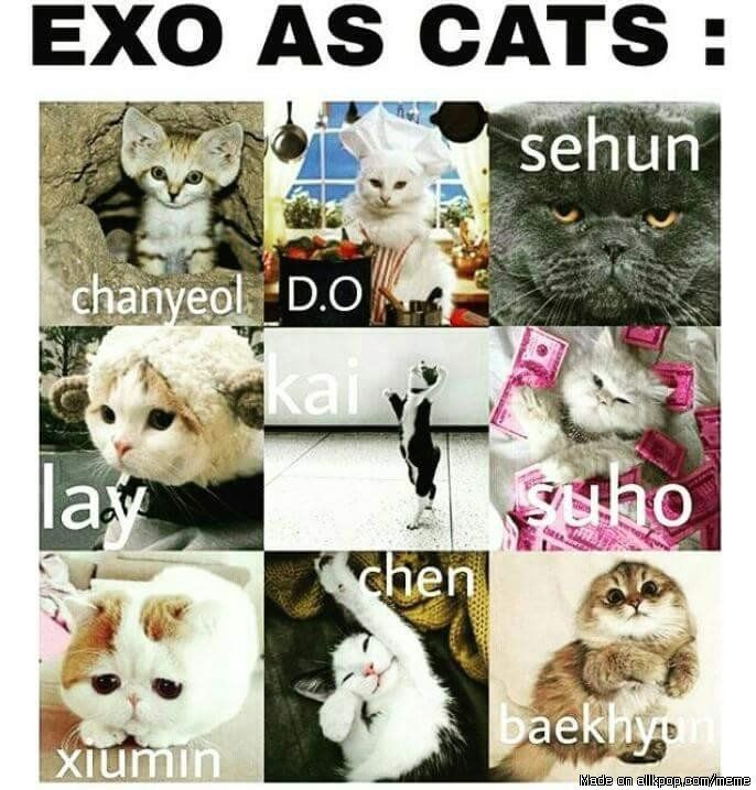 EXO as cats | allkpop Meme Center