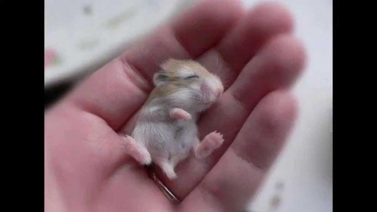 Tiny (Pirinyó)