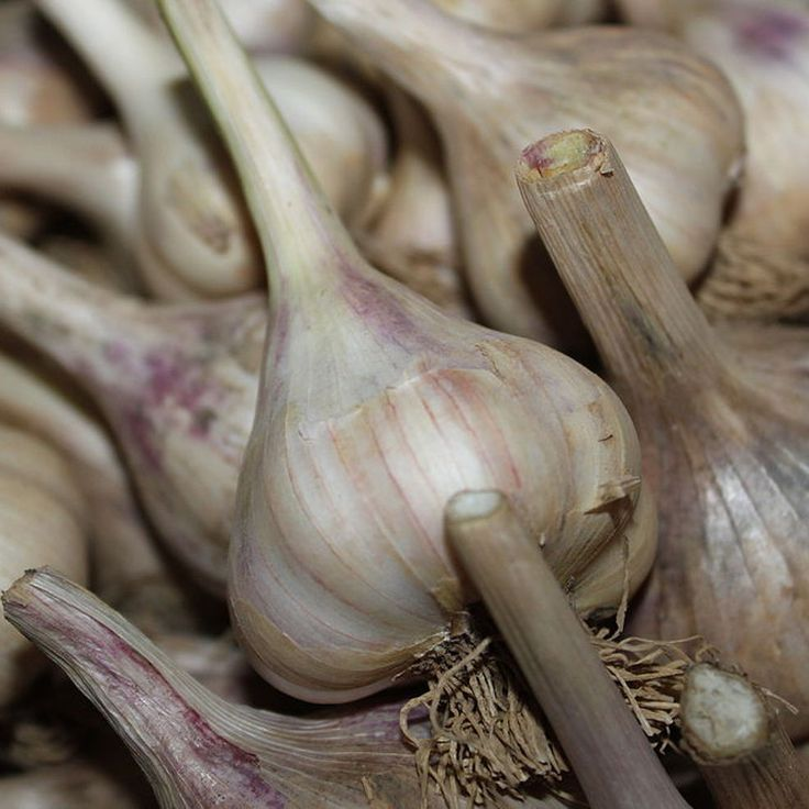How To Plant Garlic And Onions This Fall
