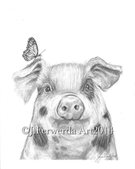 Pencil Drawing Print - Pig With Wings on Etsy, $25.00