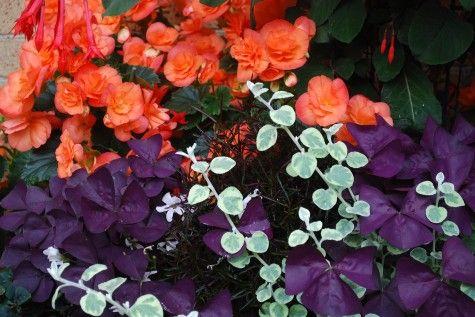 ... colour combo | Gardening | Pinterest | Orange, Landscapes and Mint