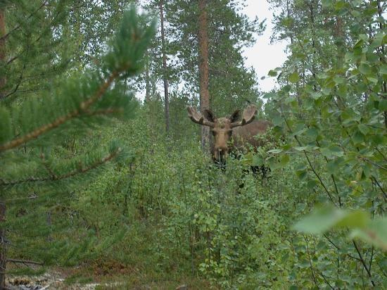 Photo of Pasvik Nature Reserve
