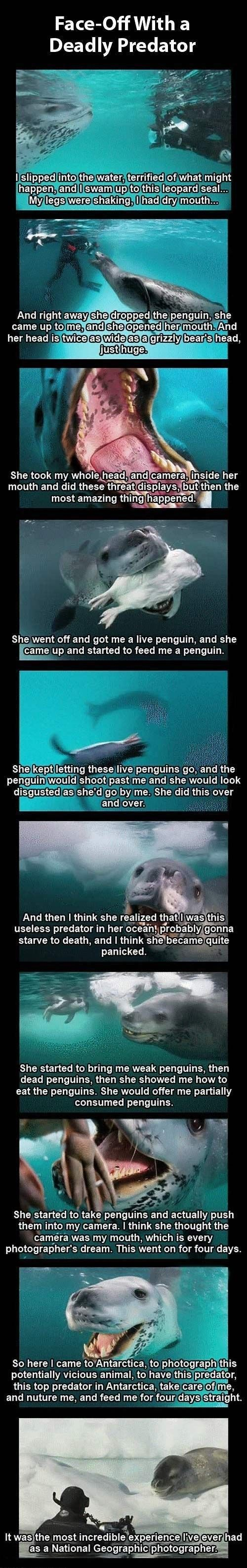 I'm STILL scared to death of Leopard Seals. Luckily I live in the Rockies. One must admit, though, this is pretty cool.