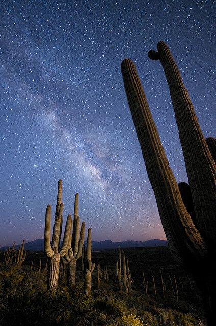 Milky Way Over Arizona by JC Richardson, via Flickr