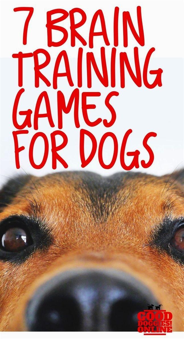 Dog Training Kong Acme Dog Training Yakima Wa Dog Training