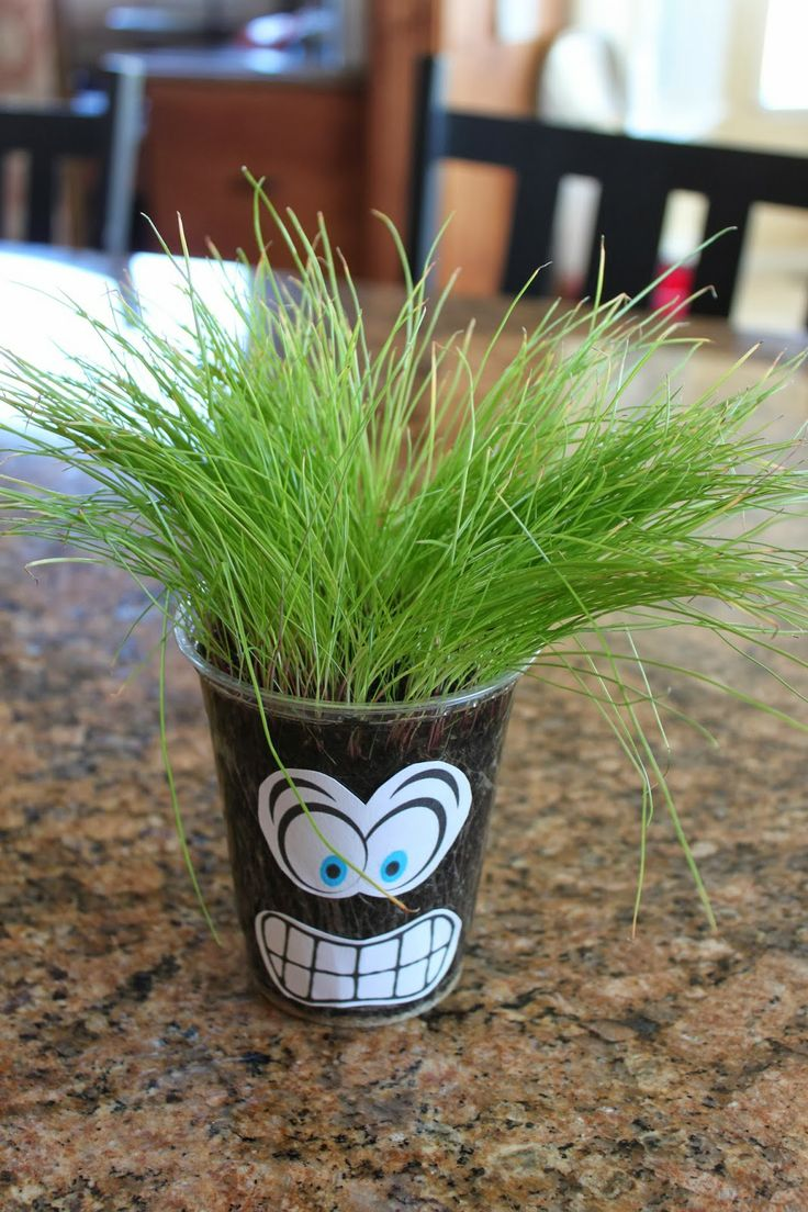Best way to plant grass seed - Grass Heads Are Like Chia Pets And A Fun Way To Teach Cubs About Growing