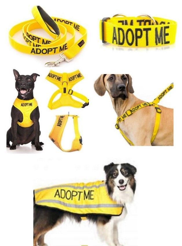 Colour Coded Dog Warning Awareness Adopt Me Harnesses Leads Collars Coats Ebay Led Collar Collars Adoption