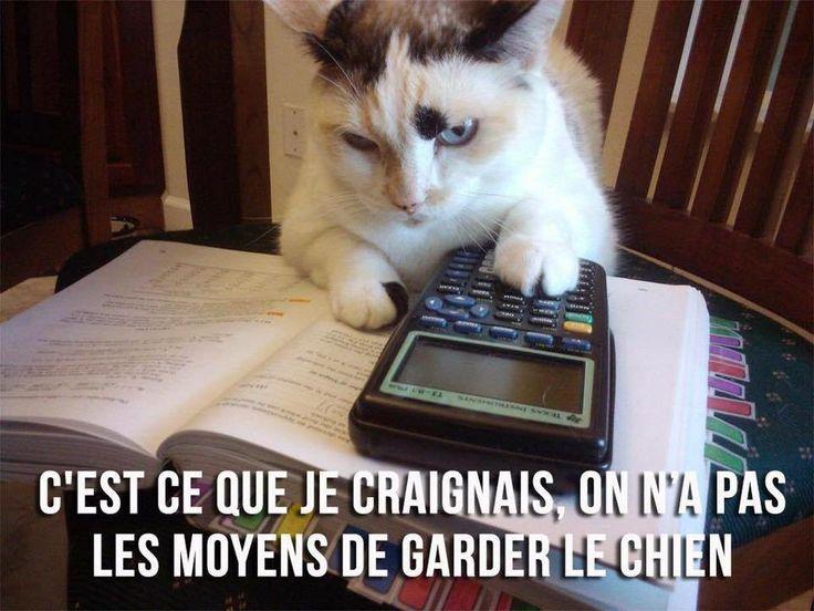 Mon comptable est formel. https://www.15heures.com/photos/p/43426/