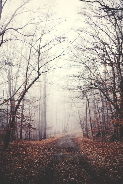 Foggy Path by Kyle D Adams