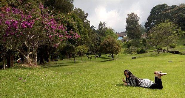Lokasi Dan Rute Taman Sakura Di Kebun Raya Cibodas, Tak Perlu Ke Jepang Jika Di Bogor Ada - http://www.dakatour.com/lokasi-dan-rute-taman-sakura-di-kebun-raya-cibodas-tak-perlu-ke-jepang-jika-di-bogor-ada.html