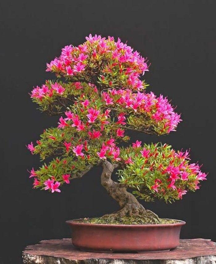 Wunderschone Bonsai Baum Kompositionen Bonsai Bonsai Bonsai