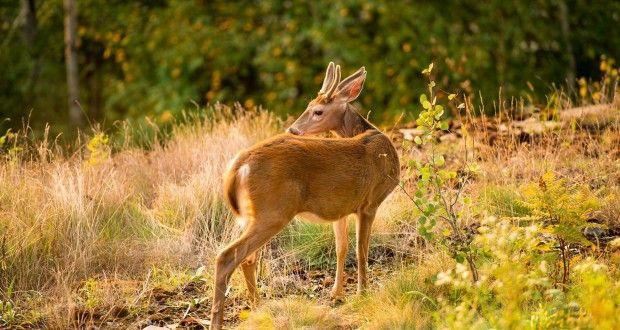 صور حيوانات الغابة بالكامل Hd اجمل صور خلفيات الحيوانات ميكساتك Deer Pictures Animals Deer