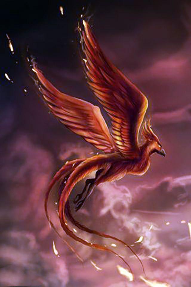Phoenix Wallpaper 234 Phoenix wallpaper Phoenix images Phoenix art