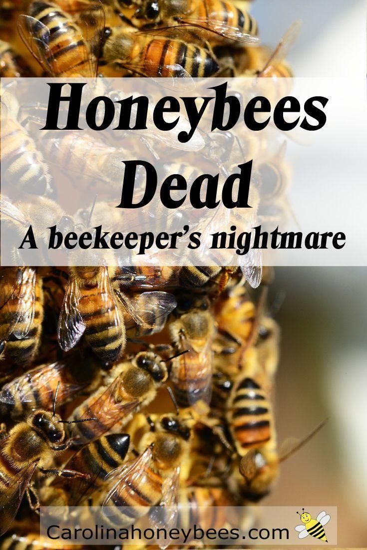 Carolina Honeybees Farm blog tells sad story of dead bees #honeybees #beekeeping :(