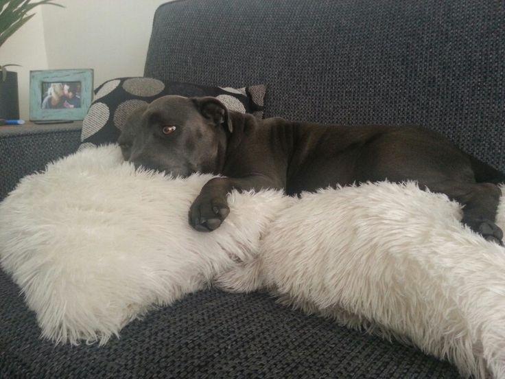 Molly snuggling a cushion