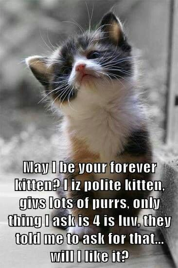 Furever kitten