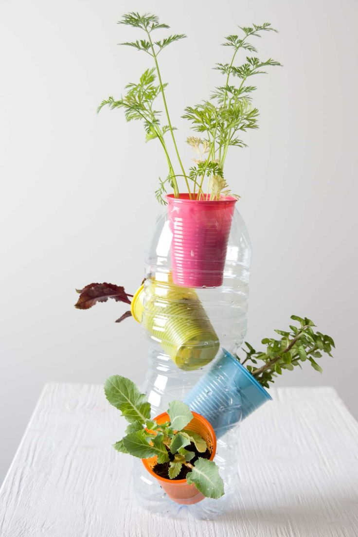 Reuse plastic cups and bottles and make a bottle herb farm.