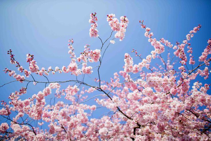 1395263865_primavera.jpg (5184×3456)