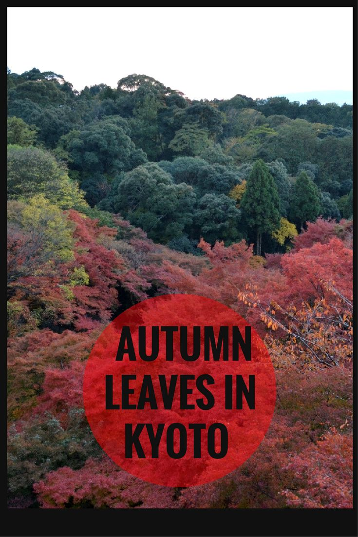"Discover the beautiful Autumn Leaves in Kyoto! Walk through the famous and must-see attraction Kiyomizu Dera Tempel, literally ""Pure Water Temple"",  and enjoy  the colors!"