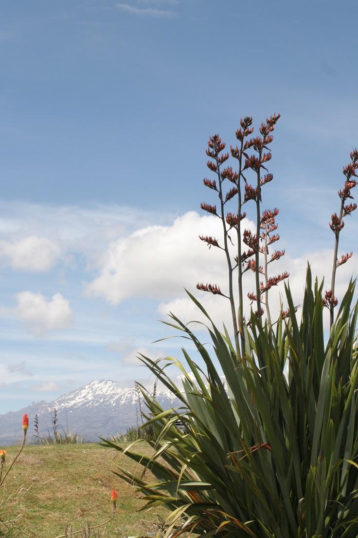 Mount Ruapehu, Nieuw Zeeland