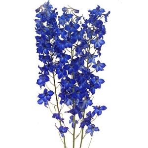 Love This True Blue Flower Surely Its Will Get Attention To Any Wedding Bouquet