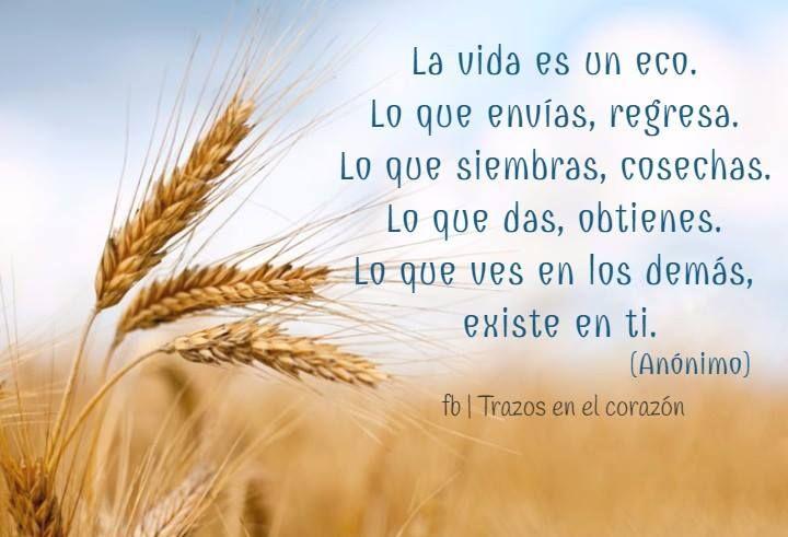 La vida es un eco. Lo que envías, regresa. Lo que siembras, cosechas. Lo que das, obtienes. Lo que ves en los demás existe en ti. (Anónimo) @trazosenelcorazon