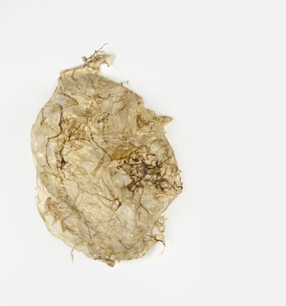 2015 Ané Lategan  Underbelly encounter Drawing, 84 x 45 x 20cm Pig gut