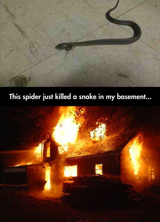 It's The Only Possible Solution  // funny pictures - funny photos - funny images - funny pics - funny quotes - #lol #humor #funnypictures