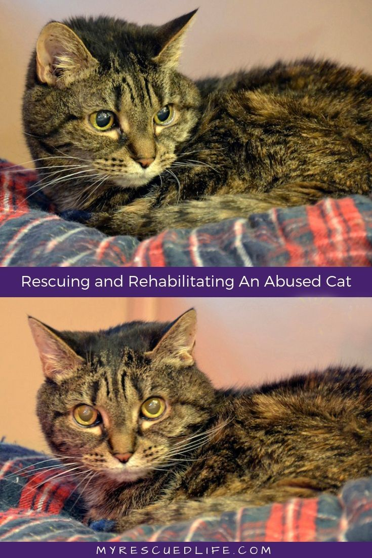The Specials Adopting A Survivor Of Abuse Cats Cat Adoption