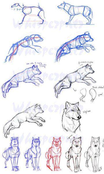 Zeichnen lernen Tutorial Hund Wolf Skizze Bleistif…