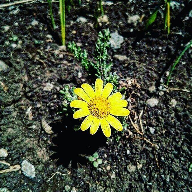 #cizre #şırnak #idil #mardin #nusaybin #amed #diyarbakır #sur #cudi #nur #followmenow #flowers wme #huzur #aşk #hayalet #mutluluk #sevgili #gt #mizah #sokak #küfür #küfürsokakta #turkey #istanbul #izmir #germany #çiçek #iyigeceler ...#traveller #photographer http://turkrazzi.com/ipost/1518897155946811671/?code=BUUNOp2j5EX