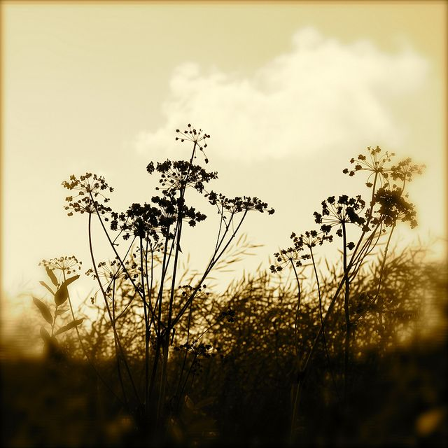 august | Liivia Sirola on Flickr