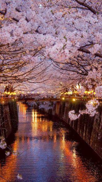 Todos sabemos que las flores japonesas son hermosas, ¿pero conoces los tipos que existen? Aquí te enseñamos todo sobre ellas.